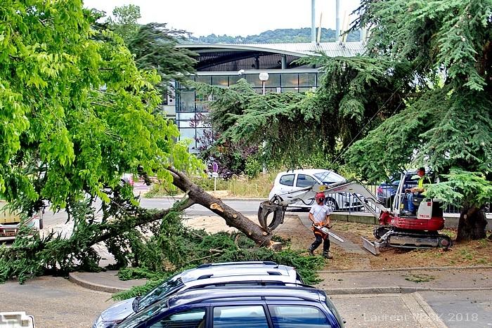 Chantier de rénovation de la place de l'Hôtel de Ville de Sotteville-lès-Rouen : abattage des arbres