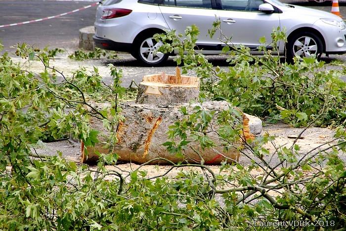 Travaux de rénovation de la place de l'Hôtel de Ville de Sotteville-lès-Rouen : abattage des arbres