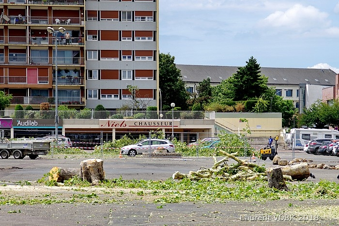 Travaux de réaménagement de la place de l'Hôtel de Ville de Sotteville-lès-Rouen : abattage des arbres